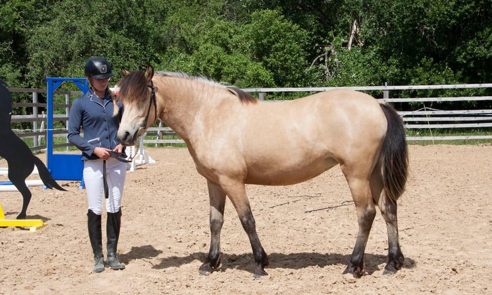 Eesti hobune – Ebeeria