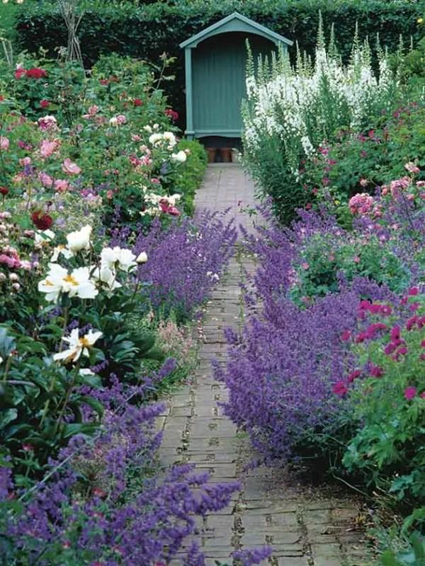 shrubs long-lasting loveliness