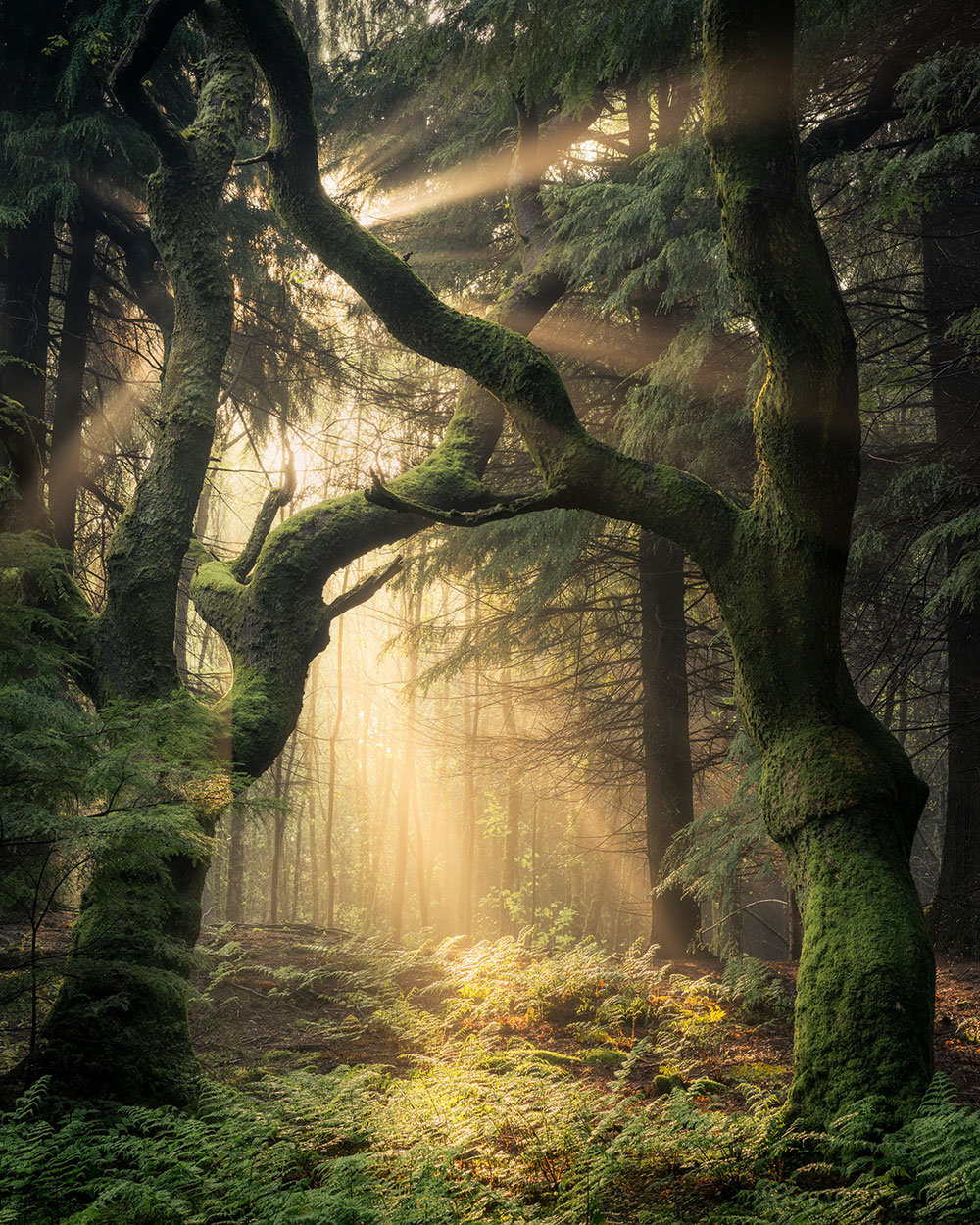 Photo Insight with Simon Baxter Guardians of the Forest