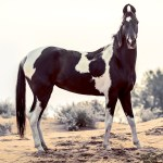 Five Rare Breeds You May Not Know About H H Plus Horse Hound