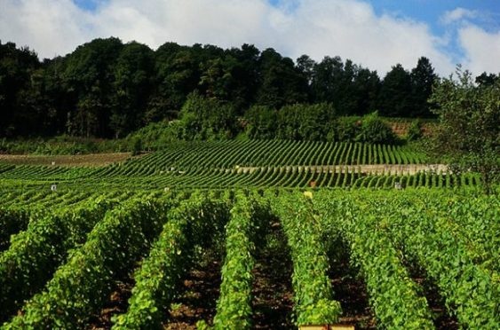 Champagne shortage, invest into Wine, Sure Holdings, Fine Wine Investment, Champagne, Good returns