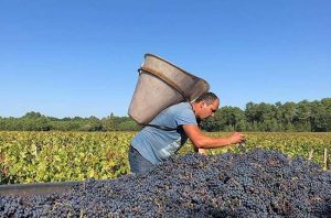 Bordeaux 2018 red wines