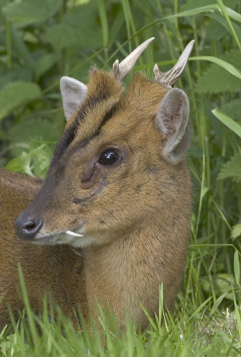 British Deer Society Calls For An End To Shotgun Use