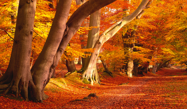 Live Wallpaper Fall Leaves 10 Glorious Photographs That Will Remind You Why You Love