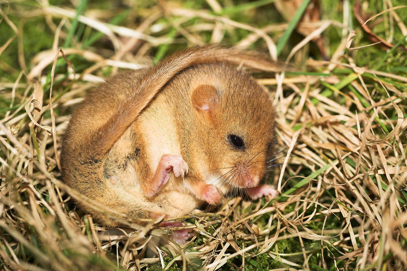Hibernation The Animal Phenomenon That Might Just Save