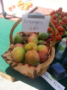 Mangoes at New Smyrna Beach Farmers Market in Florida