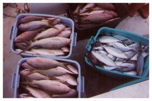 FISH_time_to_sell_92