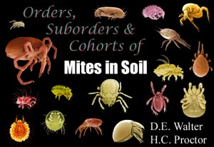Mites in Soil - Orders, Suborders and Cohorts