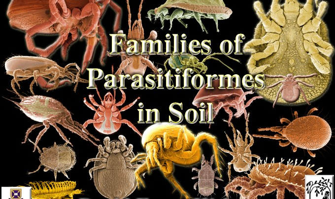 Families of Parasitiformes in Soil home page