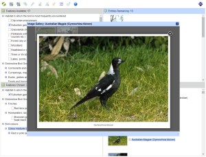 Life in the Suburbs Birds Lucid key example taxon image gallery