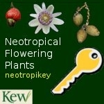 Key to the Flowering Plant Familes of the Neotropics