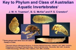 Phylum and class of Australian Aquatic Invertebrates home page