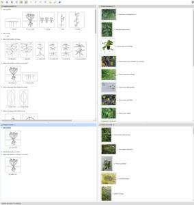 Invasive aquatic plants in Europe Lucid key interface