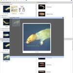 Key to Families of Australian Aquatic Diptera Larvae Lucid key feature image gallery example