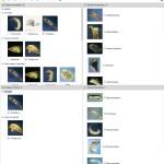 Key to Families of Australian Trichoptera Larvae Lucid key interface