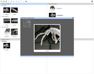 Key to Order & Superfamily of Australian Collembola Lucid gallery view