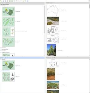 WATTLE Acacias of Australia ver. 3 Lucid key interface