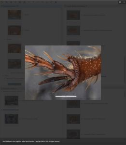 Scarab Pests Lucid key feature gallery example