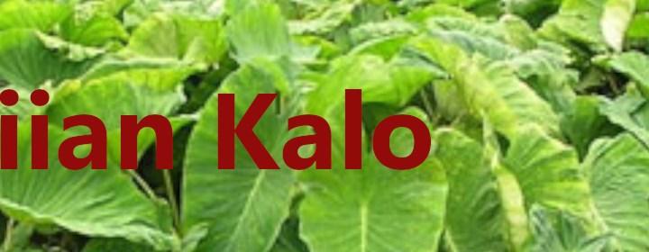 Hawaiian Kalo banner