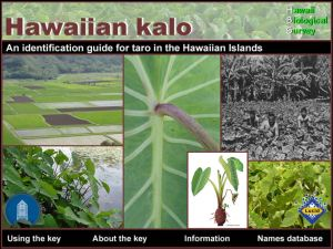 An identification guide for taro in the Hawaiian Islands