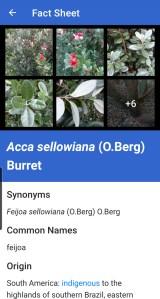 NZ Myrtaceae Lucid App example fact sheet