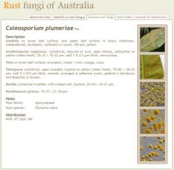Rust Fungi of Australia Lucid key