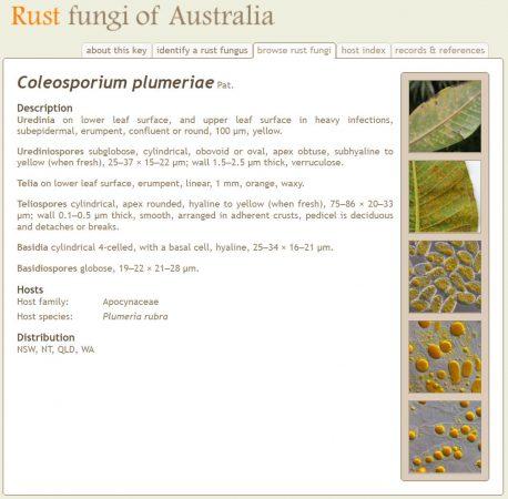 Rust Fungi of Australia