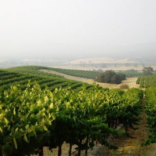 A Monterey County Discovery: Scheid Family Wines' District 7