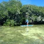 Paddling Backcountry Keys Boat Tours