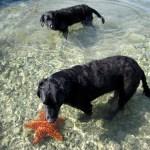 Dory and Schooner and starfish