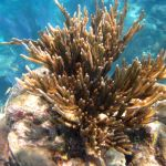 reef snorkel coral