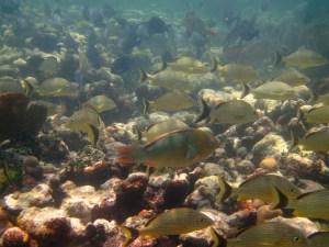 snorkeling Newfound Harbor fish