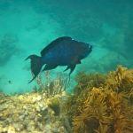 parrotfish Keys Boat tours
