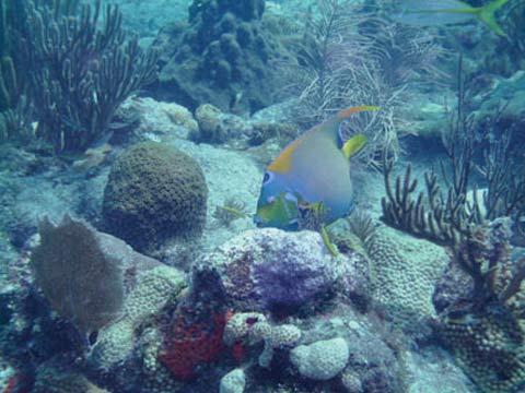 Looe Key Reef Dive Center on KeysTV