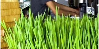 A man cooking in a kitchen - Wheatgrass
