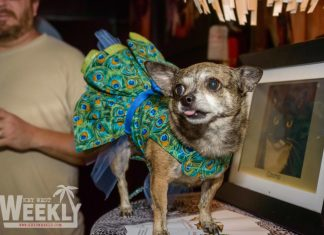 For the doggies! SPCA fundraiser at the Bottle Cap Happy Hour - A person holding a dog - Dog breed