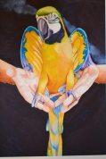 'When Parrots Were Pirates' by Sean Callahan