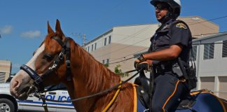 Cates questions mounted patrol - A man riding a horse drawn carriage - Horse