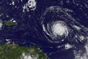 HURRICANE IRMA: From the City of Marathon - A close up of a tree - Hurricane Irma