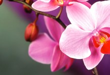 Key West Garden Club tours this weekend - A close up of a flower - Orchids