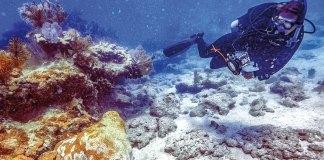 Antibiotics for the reef – BOCC hears coral disease treatment update - Florida Keys National Marine Sanctuary