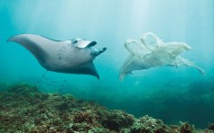 Keys photographer captures environmental crisis - A fish swimming under water - OceanCare