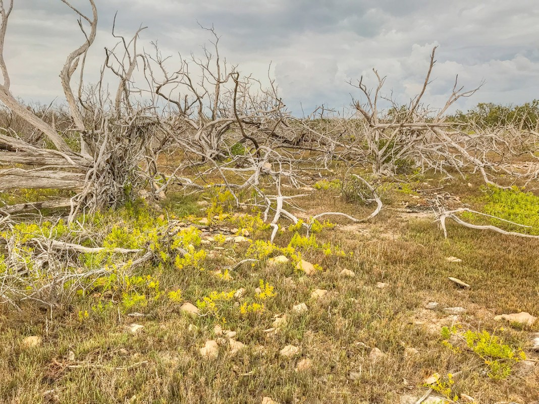 Penguins, elephants and conchs … what global environmental flux means to us - A field of grass with trees in the background - Shrubland