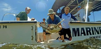 Turtle Hospital teams up with veteran combat divers for science, for good - A group of people riding on the back of a boat - Tito Puente