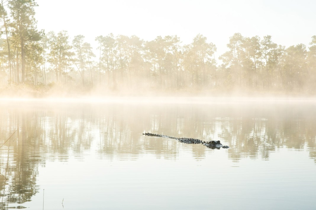 Florida Bay depends on Everglades Restoration - A pond next to a body of water - Florida Bay