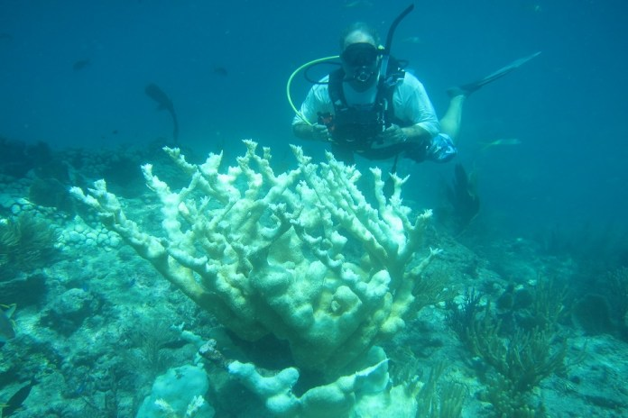 Study reveals key contributor to coral health problem - A person swimming in the water - Coral reef