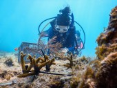 Coral Collaboration – Scientists, students and veterans join forces - Coral