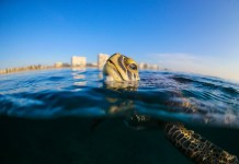 'TROUBLED WATERS' - A turtle swimming under water - WLRN-FM