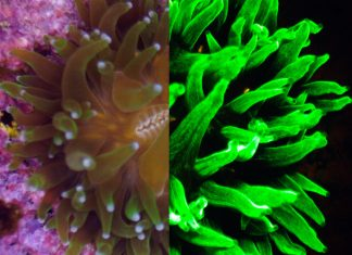 Auto Draft - A close up of a flower - Stony corals