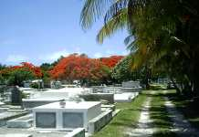 Auto Draft - A palm tree on a street - Key West Cemetery